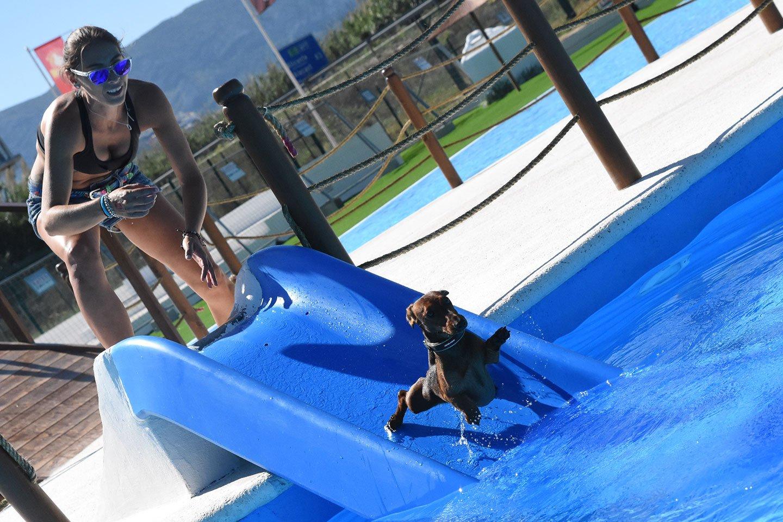 Piscina Para Perros En Alicante Costa Blanca